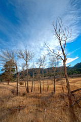 MacGregor Ranch - Fall Light (Amicus Telemarkorum) Tags: blue winter light fall nature grass clouds golden colorado outdoor hiking meadow trail goldenhour rockymountainnationalpark 2010 cirrusclouds lumpyridge macgregorranch blackcanyoncreek jeffreyrueppelphotography