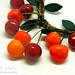 cherry det 2