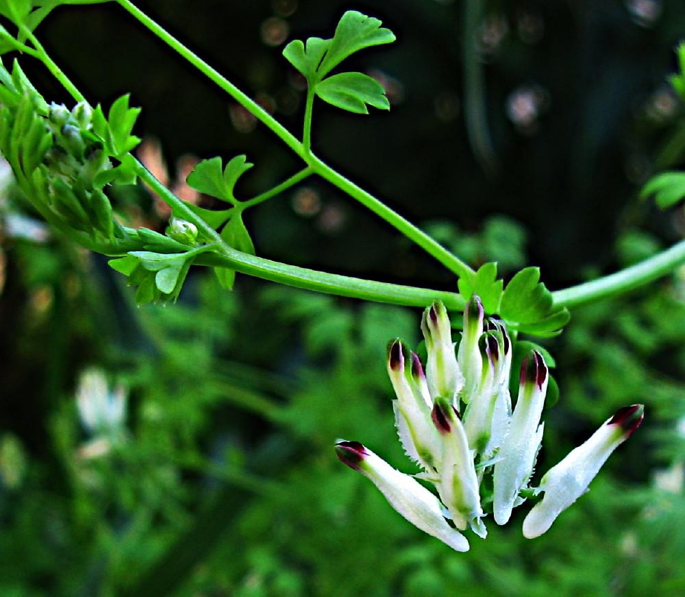 12-03-2011-flower-white2