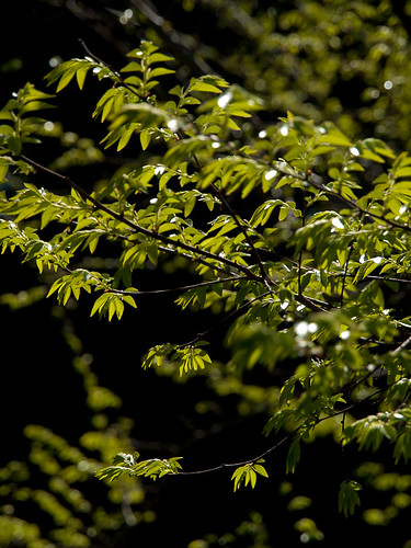 Sunlight dappled leaves
