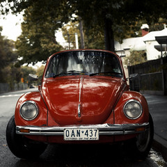 Autumn '11 (Brendan_Timmons) Tags: autumn red wet leaves day fast rainy crunchy punchbuggy 50mmf14 canon5dmkii