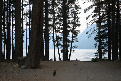 Lake at dusk, with tall pine trees silhouetted against the lake, mountains, and sky, and a small grey dog in the foreground.