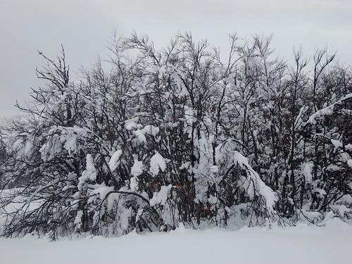 Schnee Sk 2