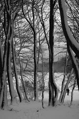 SONY DSC (Stella-Joana) Tags: winter blackandwhite mountain snow tree nature fantastic bulgaria pascal 2011 pirdop fantasticnature natureplus sonywinterwhitetreemountain