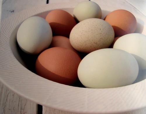 egg print for Japan