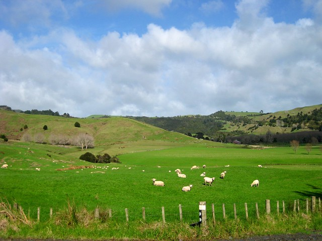 New Zealand Countryside, Northland, New Zealand, sheep