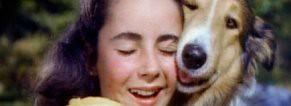 Elizabeth Taylor, Lsssie