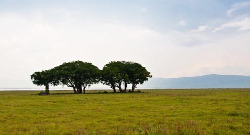 Ngorongoro Trees