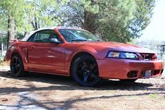 IMG_0238 (wtfcrunch) Tags: 2003 ford cobra mustang gt blackrims