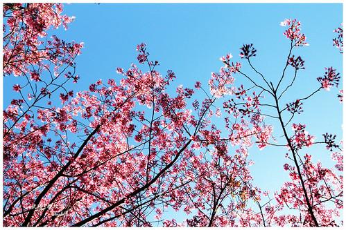2011-03-04 陽明武陵 203 r