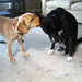 Lola and Mesa