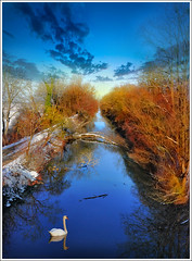 Blue Line (Jean-Michel Priaux) Tags: blue trees winter france cold nature water forest photoshop river way landscape canal swan hiver line alsace paysage froid hdr waterway ried priaux vanagram artolsheim hessenheim mygearandme