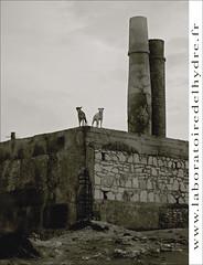 chien noir, chien blanc (laboratoire de l'hydre) Tags: chien architecture pierre sable maroc mur plage essaouira cheminée digitalcameraclub