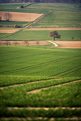 depth of field (Dennis_F) Tags: trees tree green nature colors field lines zeiss landscape 3d spring dof sony natur tracks felder spuren traces shallow grn fullframe dslr baden landschaft za depth baum farben frhling 135mm fokus weingarten