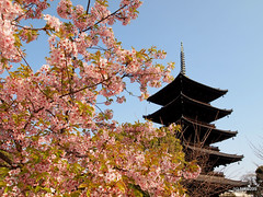 Cherry Blossoms and Pagoda by takau99