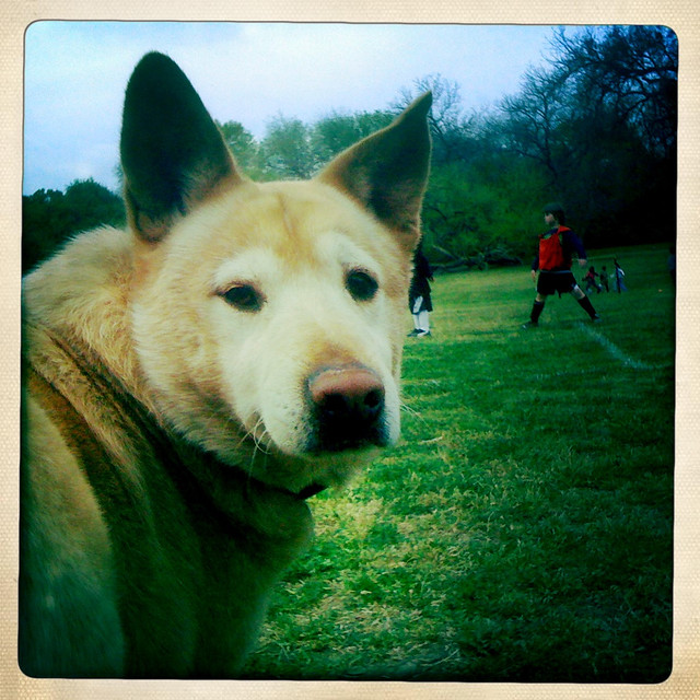 Ringo at Soccer Practice