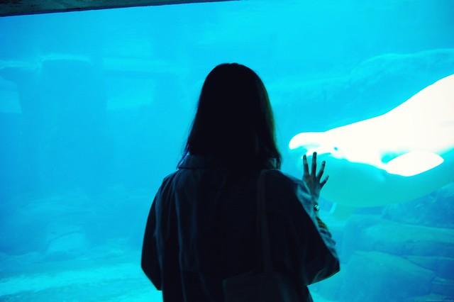 beluga wave.