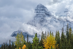 SEASON'S CHANGES (Sandy Stewart) Tags: winter mountains mountainpeaks rockymountains canadianrockies jaspernationalpark banffnationalpark beautiful nature trees autumn fall clouds northamerica sandystewart color photography landscape