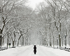 063-365  Sometimes, You Have To Just Quietly Stand There & Let the Beauty Seep In.... (TravelsWithDan) Tags: nyc snow newyork oneaday project day centralpark 365 top20nyc 365photo daypicture