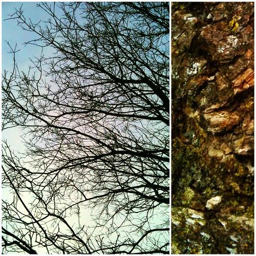34:365 Tree dippy