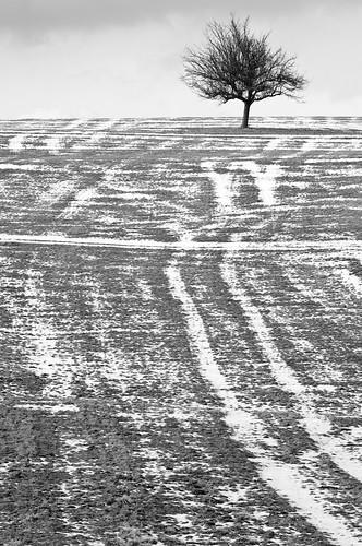 einsamer Baum bei Tauwetter #2