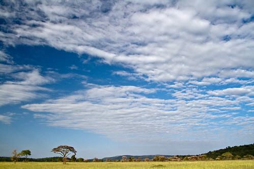 The Savanna in Serengeti