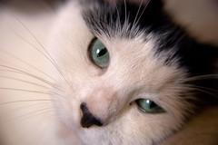 Lola - wide angle lens test (Richard Amor Allan) Tags: cat lens angle wide lola