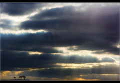 Let there be.......... (Digital Diary........) Tags: trees sky storm clouds skyscape bigsky rays sunrays minimalist crank chrisconway goodlight billinge