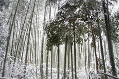 Beauty of snowing @ Kyoto (visit_kyoto) Tags: travel winter snow birds japan river kyoto