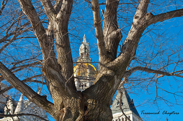 Tree - Capitol Building