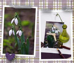 20110204_FirstSnowdrops