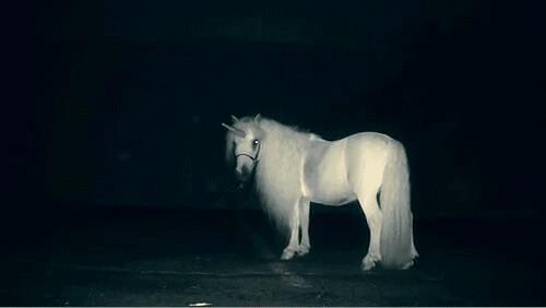 unicornintheroad65