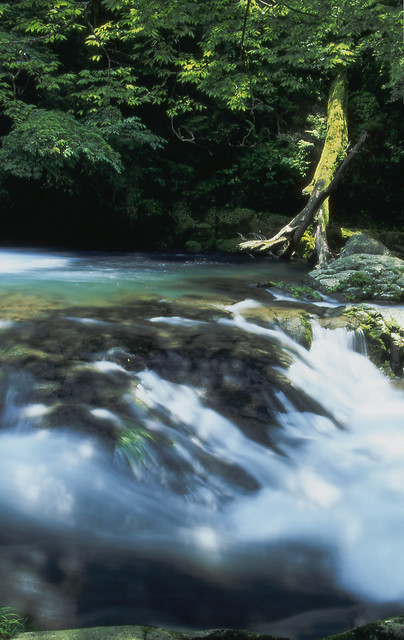 渓流と木のフリー写真素材