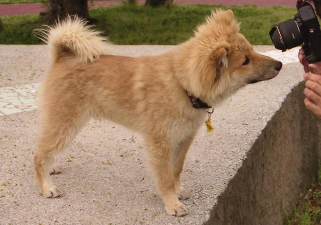 犬とカメラのフリー写真素材