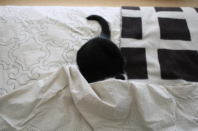 dwell cat