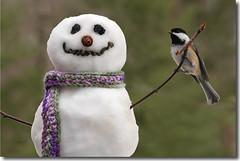 ~Love~ (nature55) Tags: snowman mercer chickadee wi bej specanimal turtleflambeauflowage frontpageexplore nature55 magicunicornverybest jaynegulbrand 1explorepage