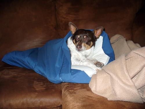 2011-02-12 - Rennie's Coma Cozy (tm) - 0006