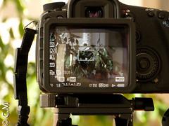 MagFinder_MonitorX_Canon7D-10.jpg