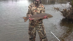 6lb Salmon (salmoferox) Tags: scotland fishing salmon 6lb riverteith