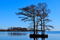 Tree at Edenton Bay (RobertJPhotos) Tags: blue sky tree water silhouette bay nikon north carolina edenton d5000
