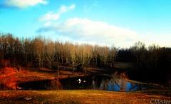 Pond Overflow (CMesker) Tags: winter pond backyard flooding ansh nikond80 pondoverflow cmesker scavenger7