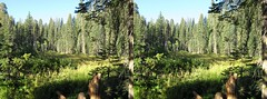 3D Pictures From Central California Trip (Redbeard Math Pirate) Tags: trees forest nationalpark stereoscopic 3d crosseye stereo stereopair sequoia sequoianationalpark threedimensional crossview