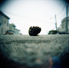 san francisco pine cone (lomokev) Tags: sanfrancisco road street focus dof kodak low kodakportra400vc ground depthoffield diana groundlevel pinecone dianaf portra kodakportra400 ratseyeview kodakportra file:name=100814dianavc011rescan roll:name=100814dianavc