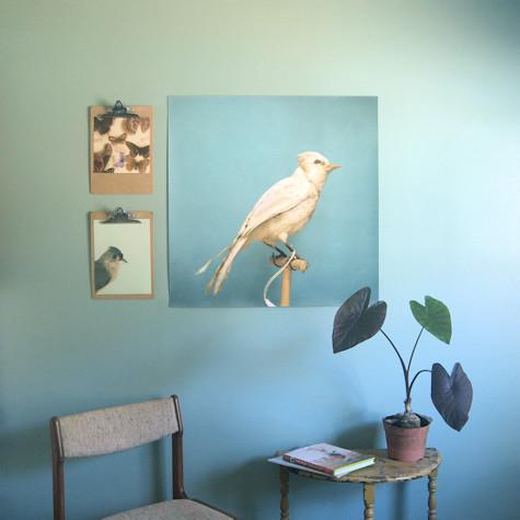 30x30 Albino Blue Jay