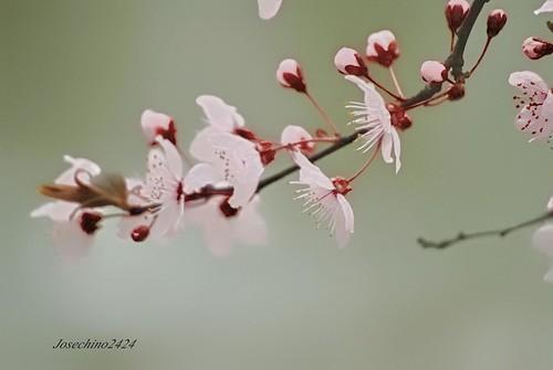 Anuncio primavera 2