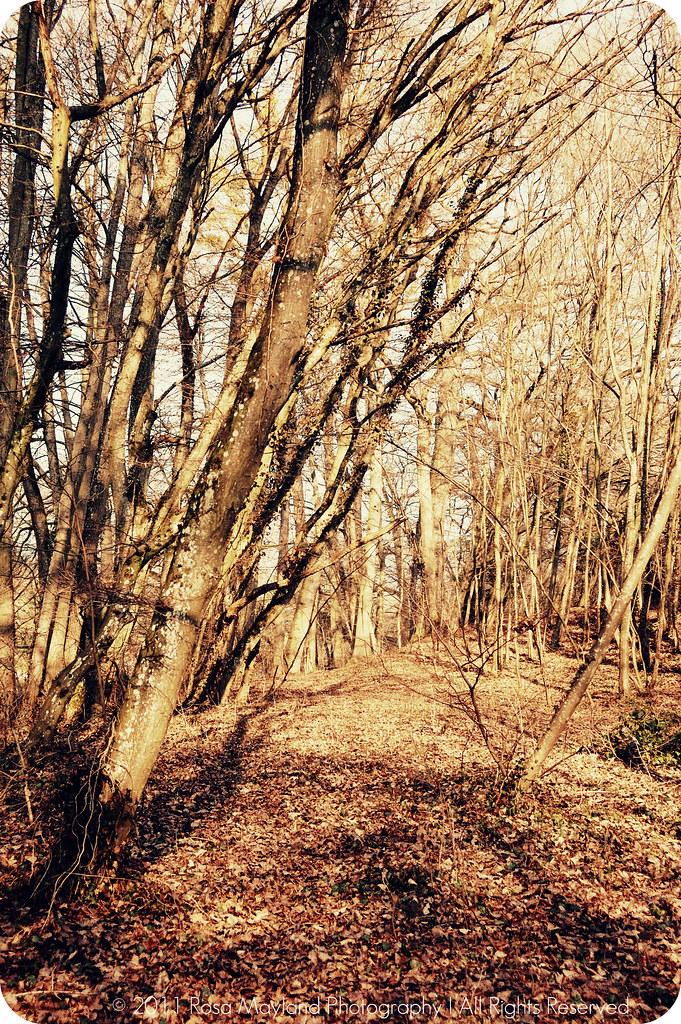 Spring Forest Arve Walk 1.1 bis