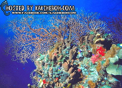 belize_reef1