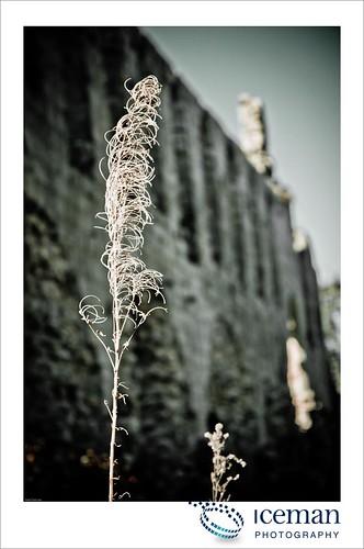 Jervaulx Abbey 036