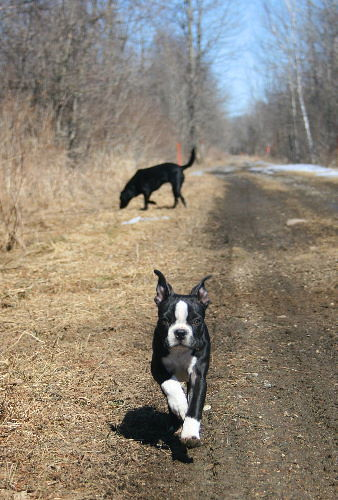 Jack and Raven on the rail trail
