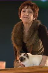 DSC_0076 (Francesco_Fontana) Tags: cat kat chat gato katze mace  macska gatto  con kot gat koka kedi kass katt kissa kttur maka kucing pusa mo   kat  kais    pisic  qattus   kais